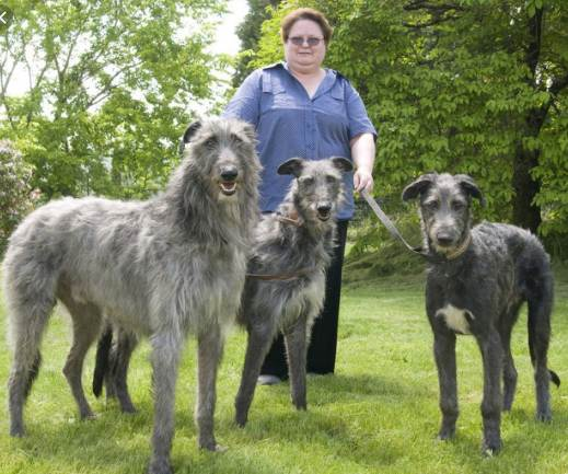 Top 10 biggest Dog Breeds in the World 2020