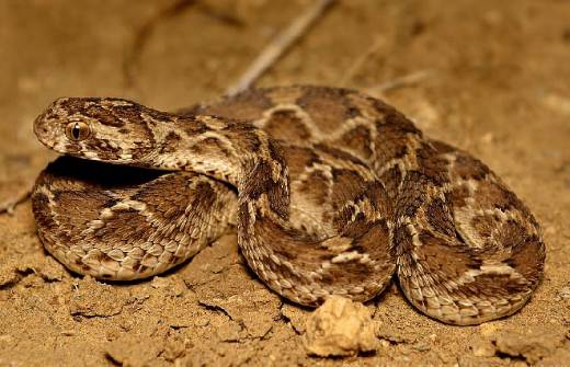 Top 10 Most Poisonous Snakes in The World (2020)