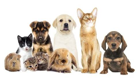 Top 10 Best Pet Insurance Companies of 2020