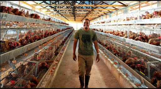 How to start a poultry farming business in Nigeria