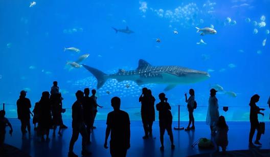 Top 10 Biggest Aquariums in the World 2021