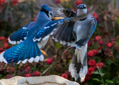 Most beautiful birds in the world 2021