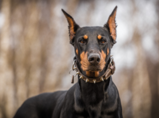 Most Aggressive Dog Breeds in the World 2021