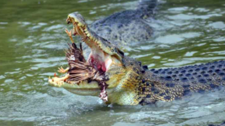 Most Dangerous Animals in the World 2021