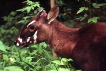 Top 10 Rarest Animals in the World 2021