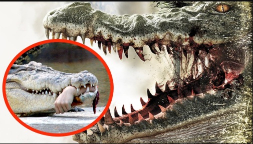 Top 10 Most Dangerous Animals in the World 2021