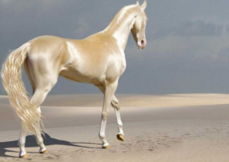 Best Horse Breeds in the World