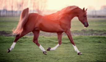 Best Horse Breeds in the World 2021