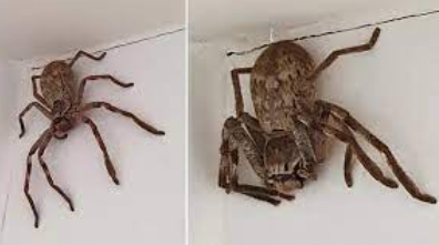 largest spiders in the world 2021