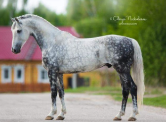 Top 10 Fastest Horse Breeds in the World (2021)