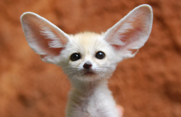 Top 10 Cutest Animals in the World 2021 (For Pets)