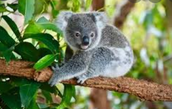 Cutest Animals in the World 2021