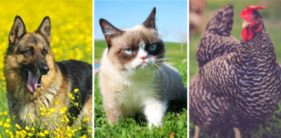 Top 10 Richest Pet Animals in the World 2021