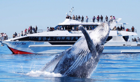 10 Exciting Things to do in Gold Coast